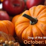 Dog Of The Month: October 2016
