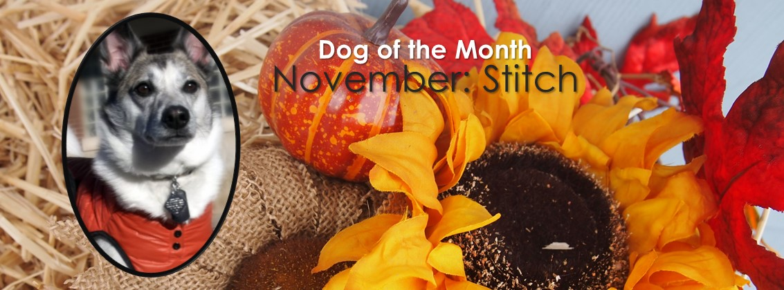 Dog Of The Month: November 2016