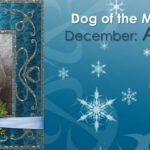 Dog Of The Month: December 2016