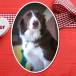 Dog Of The Month: February 2017