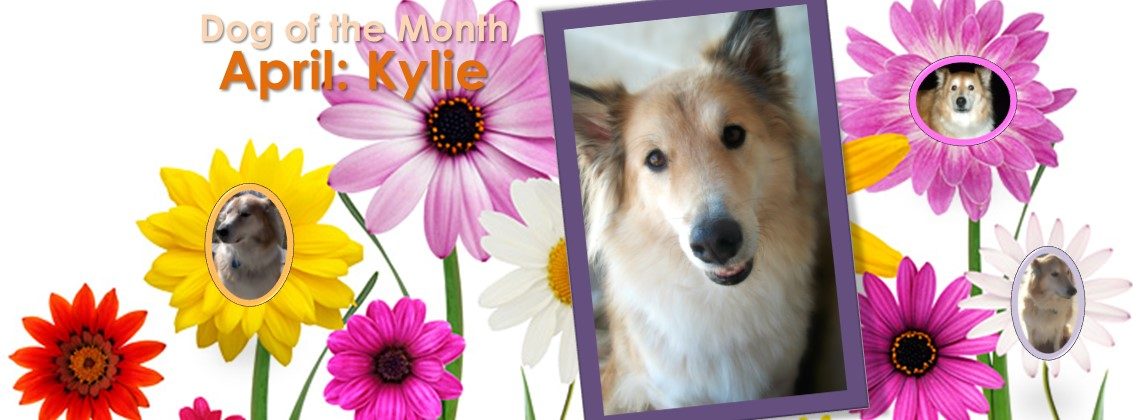 Dog Of The Month: April 2017