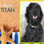 Dog Of The Month: June 2017