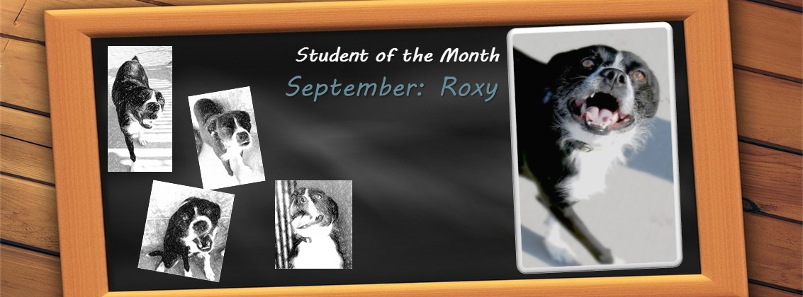 Dog Of The Month: September 2017