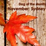 Dog Of The Month: November 2017