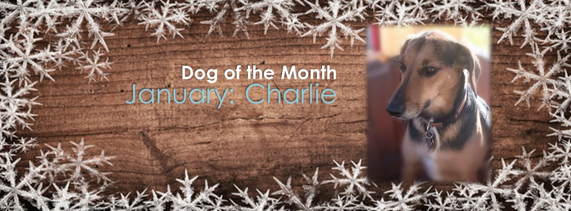 Dog Of The Month: January 2018