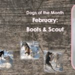 Dogs Of The Month: February 2018